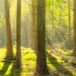 A Route to Zero: A Case for Forest and Woodland Creation