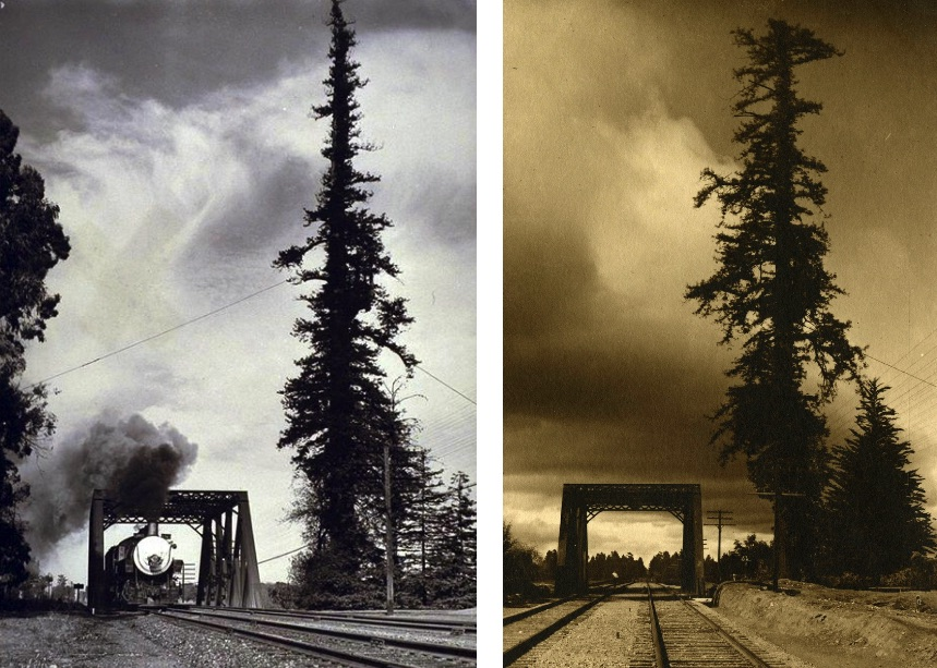 Two photos of the same tall spindly tree next to a railway track. One showing thick black smoke from a steam train.