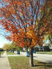 BEAUTIFUL colors in our neighborhood.