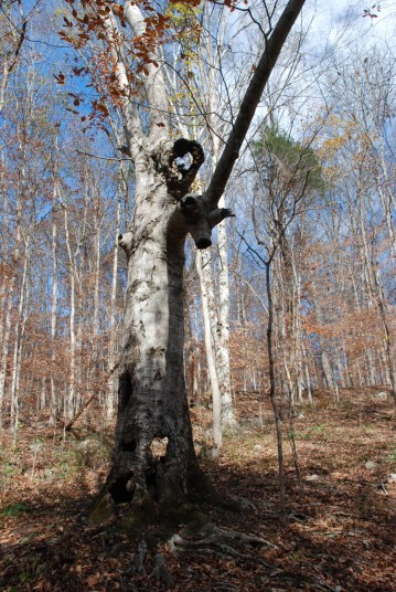 32holey_tree