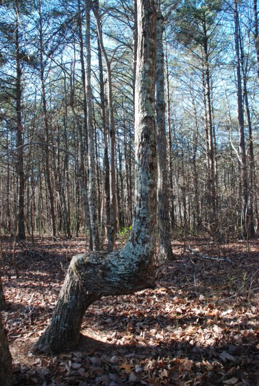 29marker_tree_1
