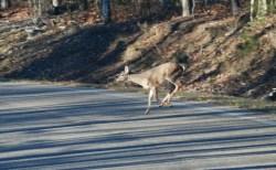 89second_deer