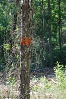 Orange markings on trees