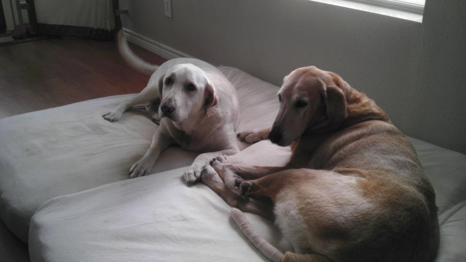 dog spa and resort