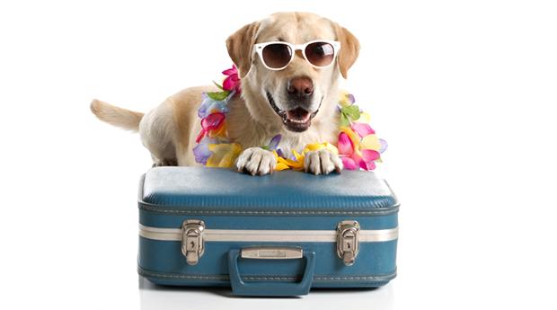 best dog boarding houston