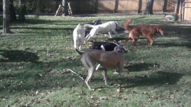 doggy daycare houston tx