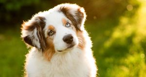 tips to raise a healthy dog