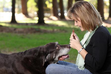 senior dog diet