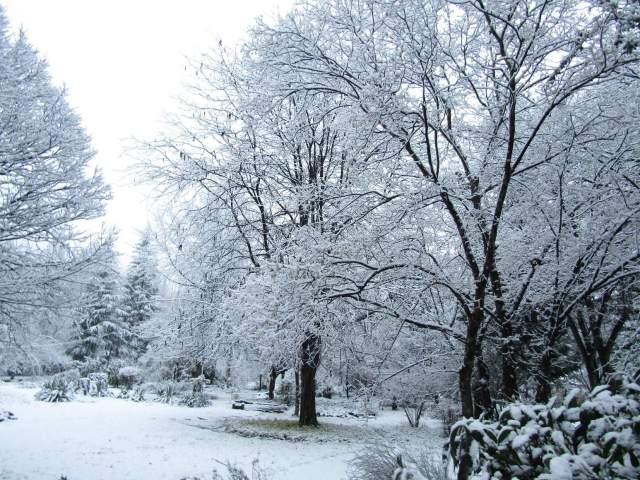 Woodlands Retreat Snow Garden -30