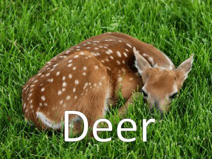 A photo of a deer