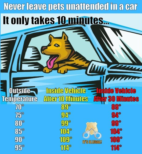 Safety Tip: never leave pets unattended in vehicles