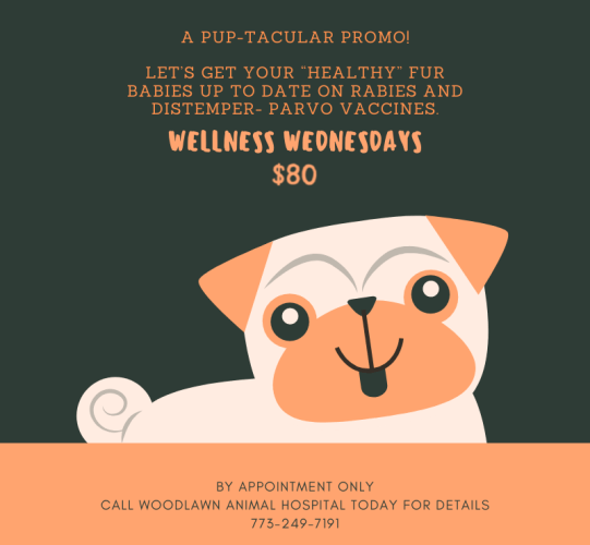 Woodlawn Animal Hospital Wellness Wednesdays for $80.00