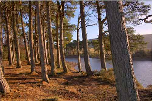 New Wood Logs Scotland Website