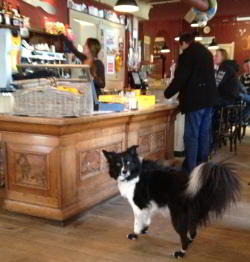 Border Collie Tap Wears Non Slip Dog Socks to the Cafe