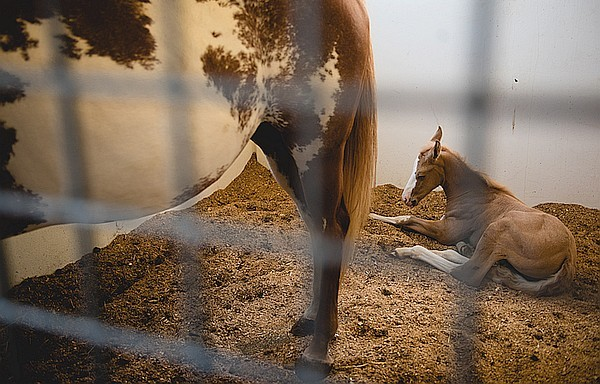 Mother horse with foal