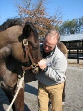 Dr. Scott Anderson treating a horse with acupuncture