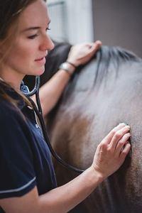 Woodside Equine Clinic ambulatory services