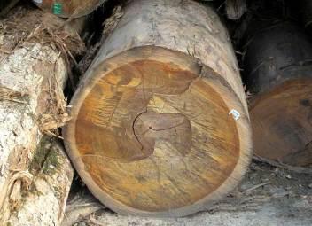 デッキ材の原木