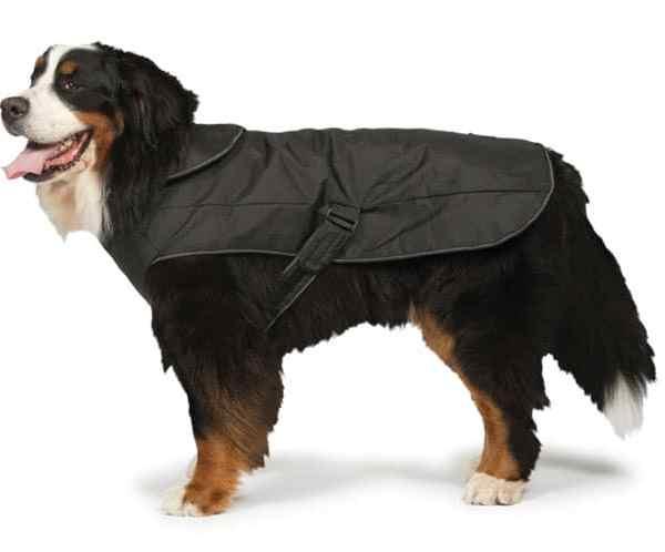 2 in 1 Waterproof Harness Dog Coat in Black