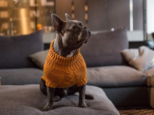 Surpreme Handknitted Dog Jumper - Tangerine Dream