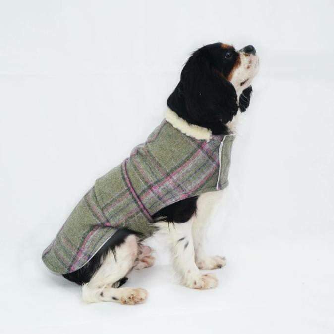 Tweed Beau Dog Coat