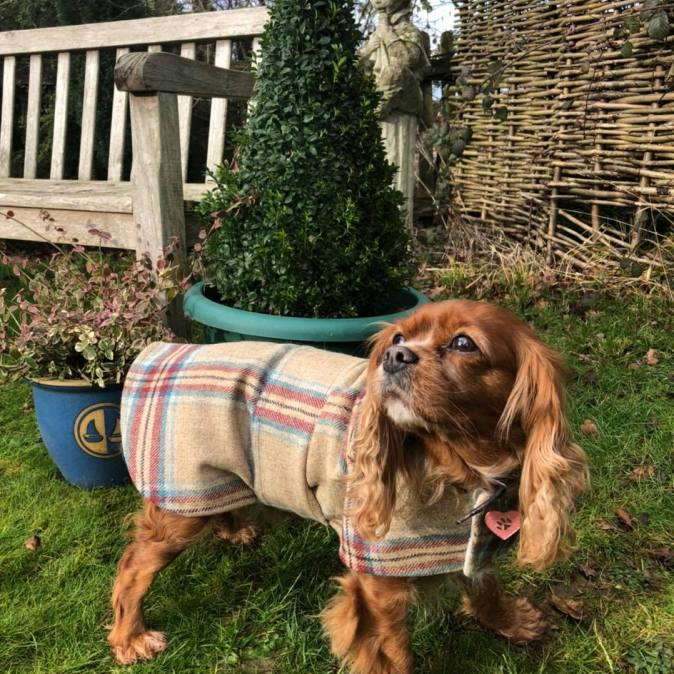 Tweed Fergus Dog Coat