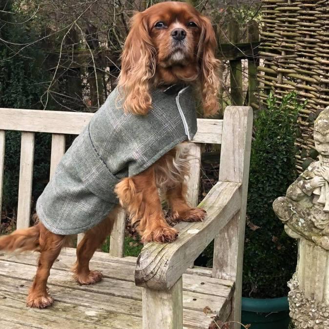 Tweed Jasper Dog Coat