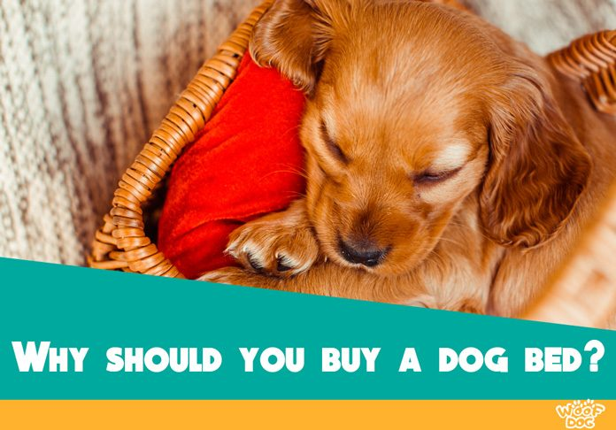 Reasons Why You Should Get A Bed For Your Dog Woof Dog