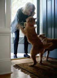 Five practical training hacks to control negative dog behavior - Jumping