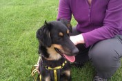 Scrappy from Dogs Trust