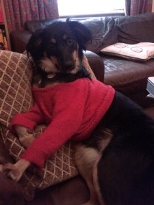 Tilley posing on sofa
