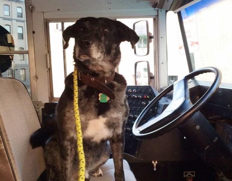 Canine Behavior Daycare