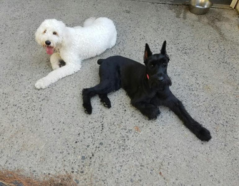 Richmond Dog Care