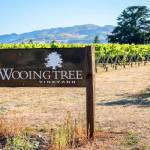 Wooing Tree Estate