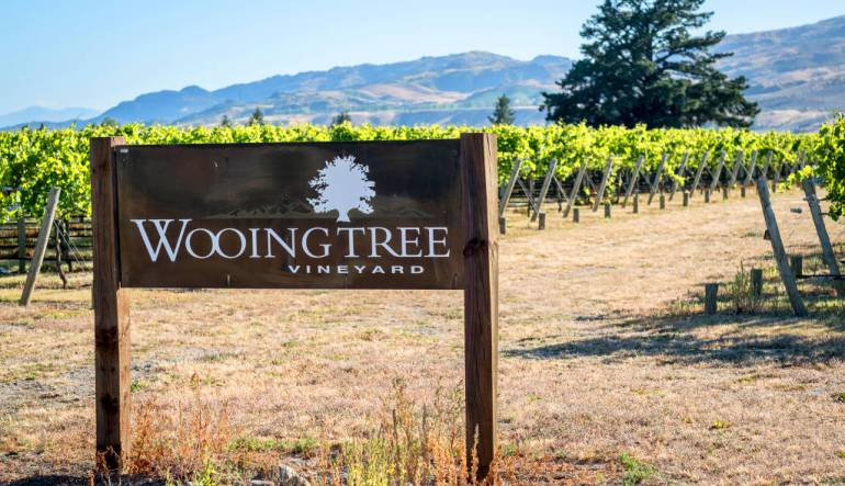 Wooing Tree Vineyard