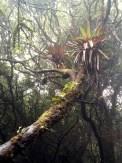 So many epiphytes!