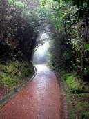 The paths were so enchanted.