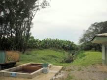 Stopping at the Del Monte banana plantation.