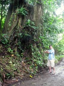 Big trees are big!