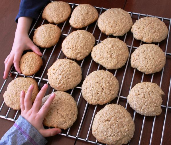Biscuit avoine wooloo