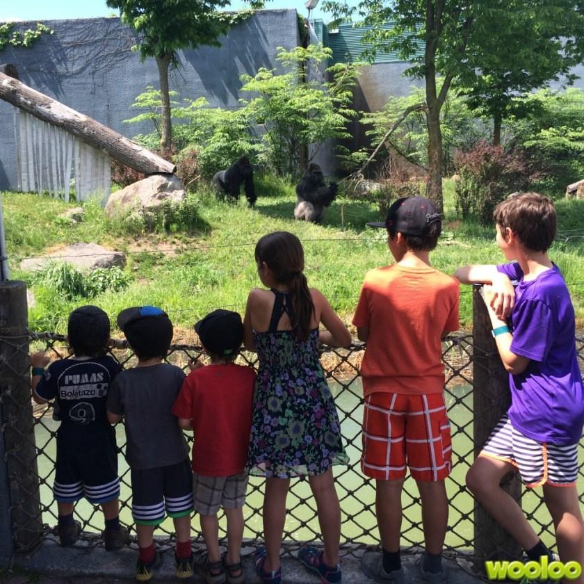 visite zoo wooloo