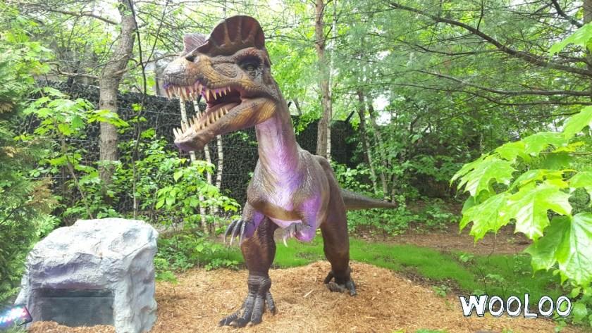 Dinozoo wooloo