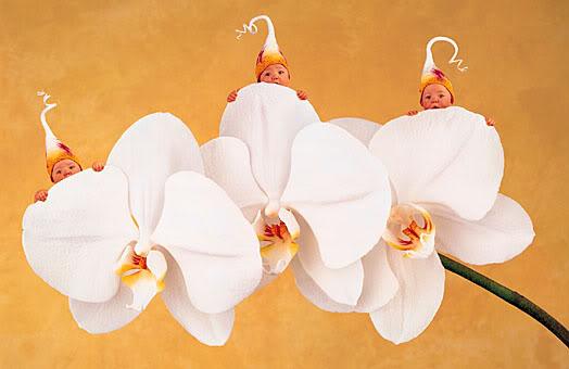 anne geddes babies10 Babies Come as Three Angels by Anne Geddes