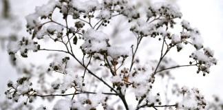 winterklaar maken tuin