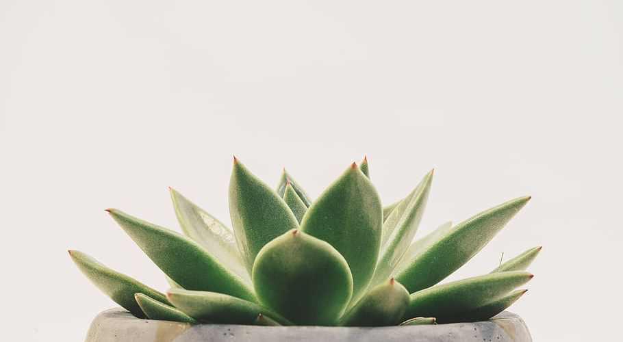 vetplantjes in huis