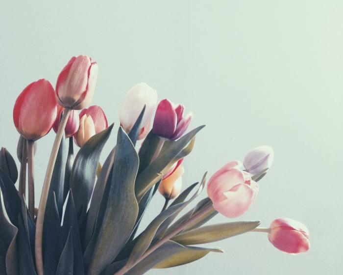 rode en witte tulpen