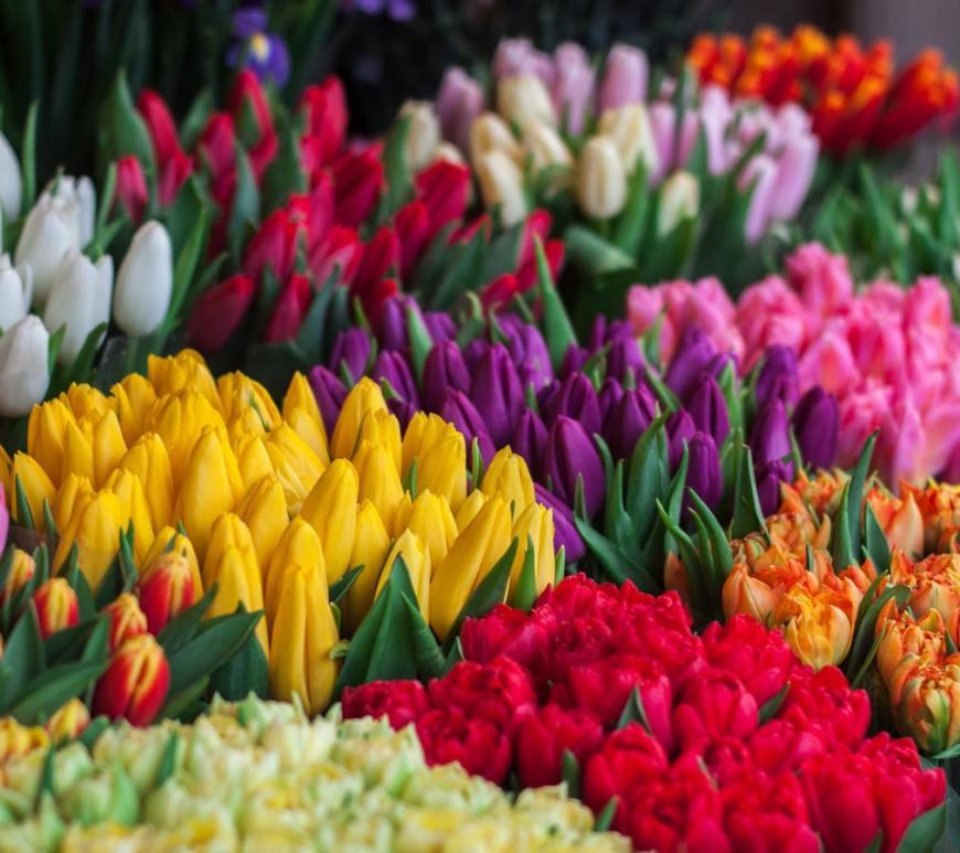 tulpen op de markt