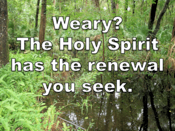 The Holy Spirit has the renewal you seek