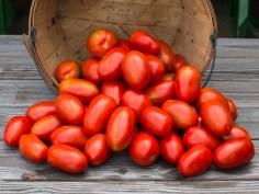 worden-farm-csa-crops-4213