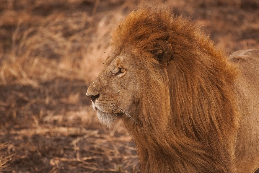 Photo credit - Amar Yashlaha via unsplash.com